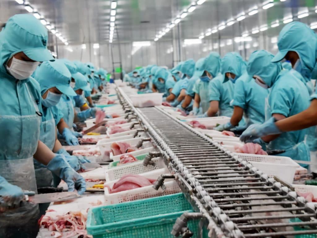 ドンタップ省の水産物加工施設での生産プロセス