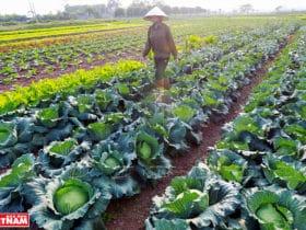 ハノイ市の農業/農産物加工について