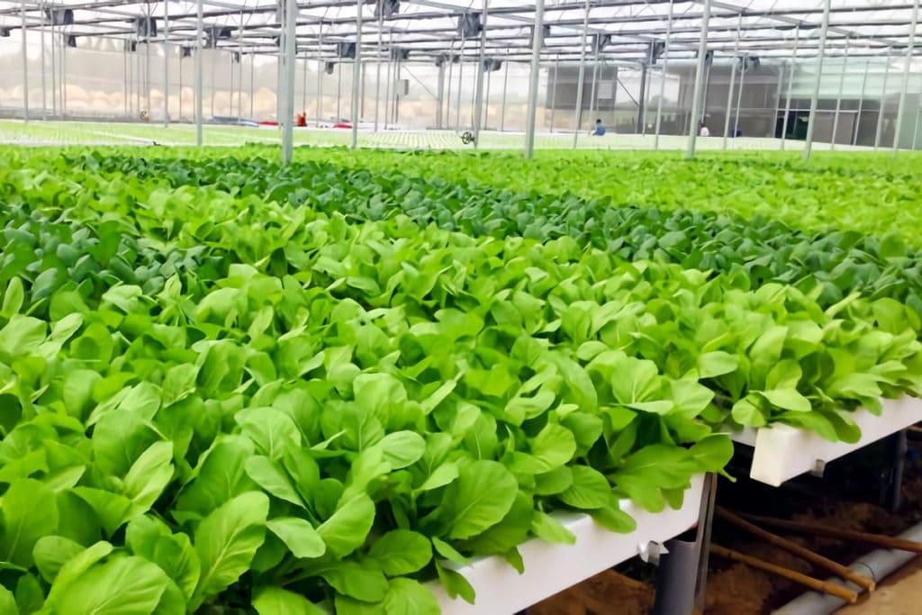 安全野菜の栽培