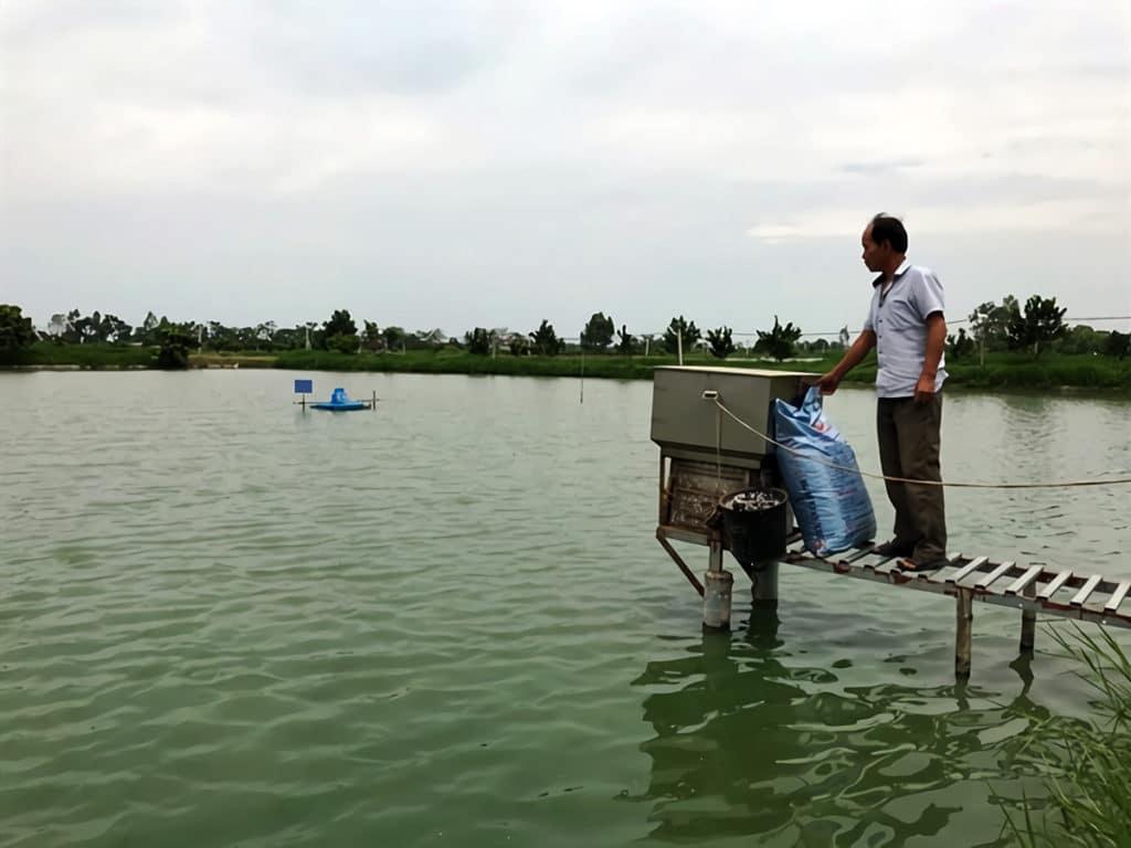 ハノイの水産養殖